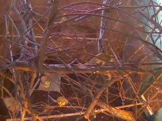 Edinburgh Zoo Squirrel Monkey Webcam