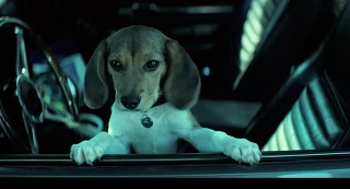 Daisy, the dog from John Wick. Don't get too attached, now.