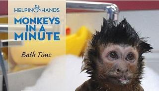 Helping Hands Monkey Helpers