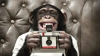 Ian Fox - Shutter Monkey