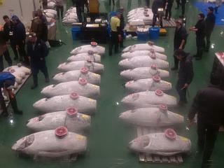 Welcome to Tokyo. Hope you like tuna.